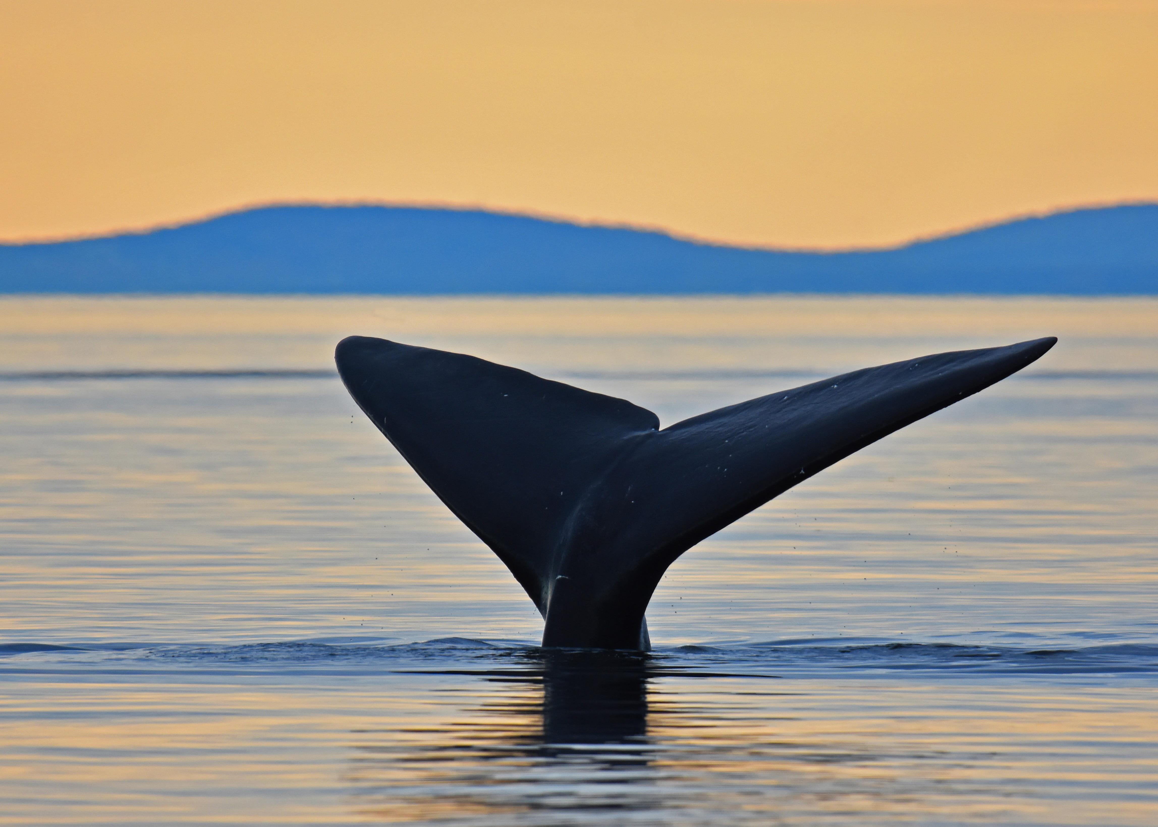 Excursion aux baleines